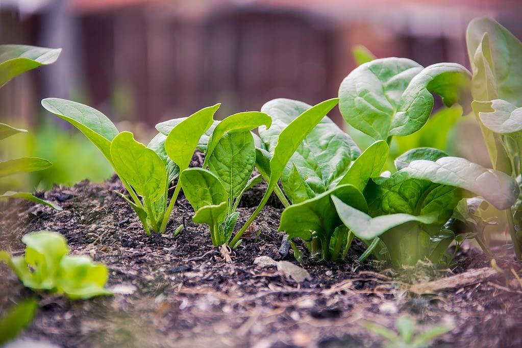 green, plan, food