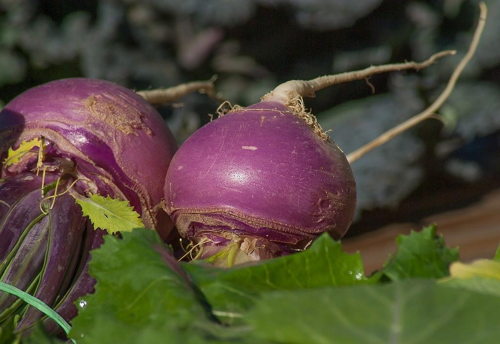turnips, vegetables, soup