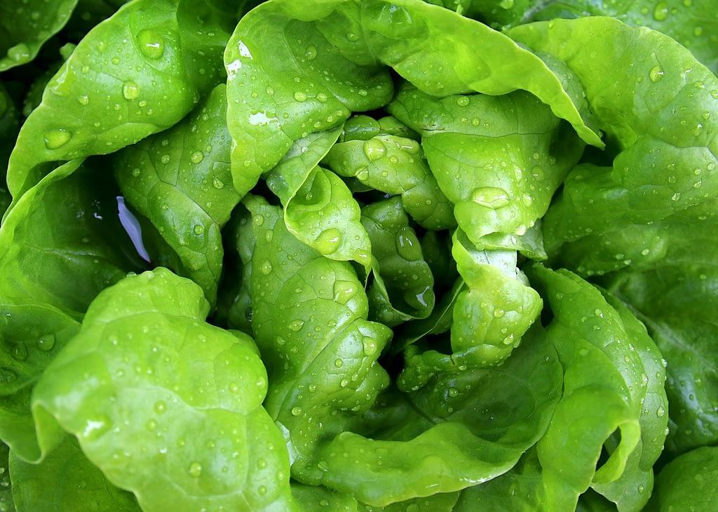salad, leaf lettuce, lettuce