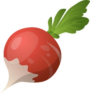 radish, vegetable, raw